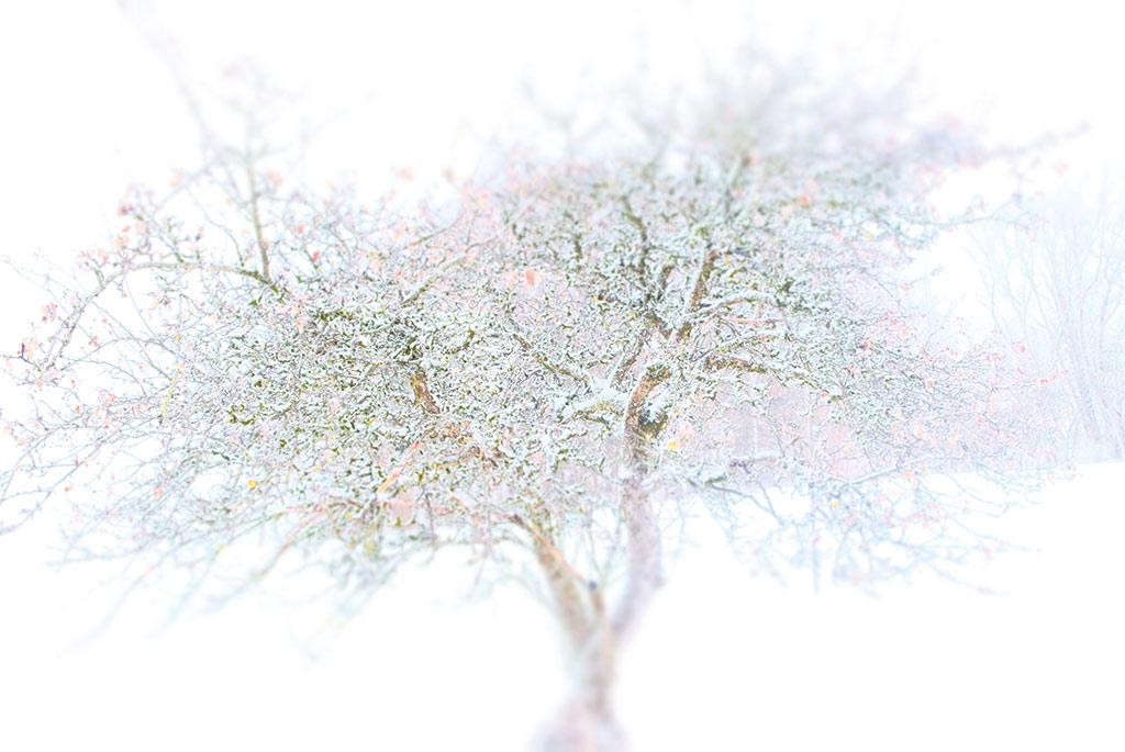 """collection """"forët"""" arbre branche neige hiver blanc"""