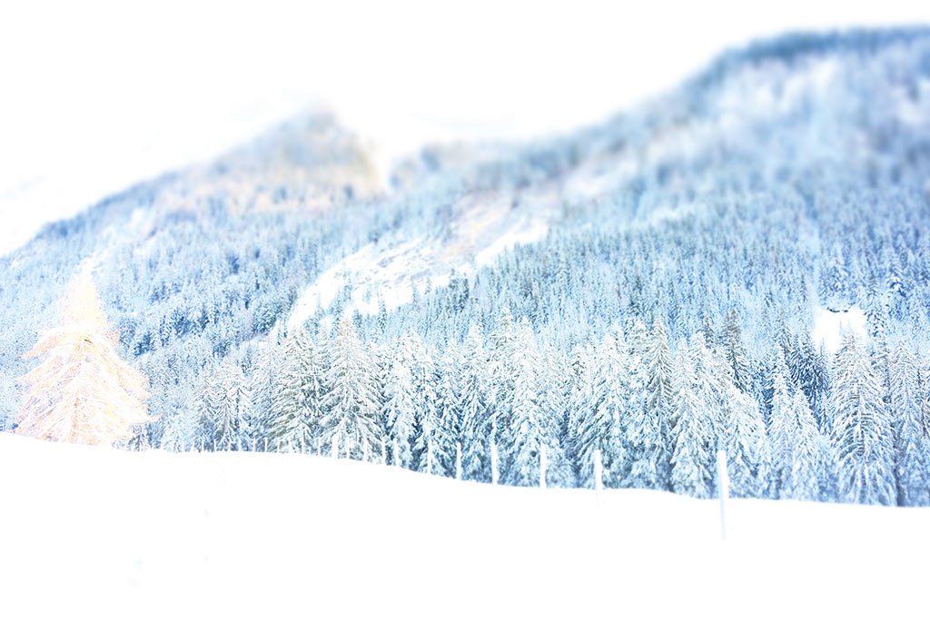 "collection ""forët"" arbre neige hiver blanc montagne sapin"