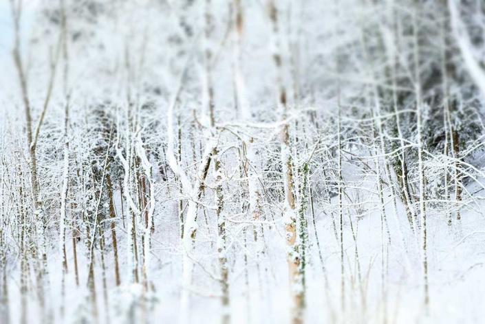 """collection """"forët"""" arbre tronc branche neige hiver blanc"""