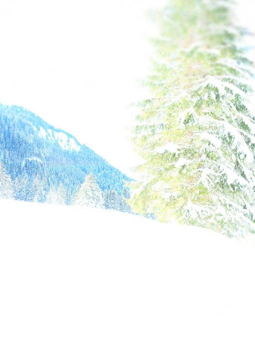 "collection ""forët"" arbre sapin montagne neige hiver blanc"