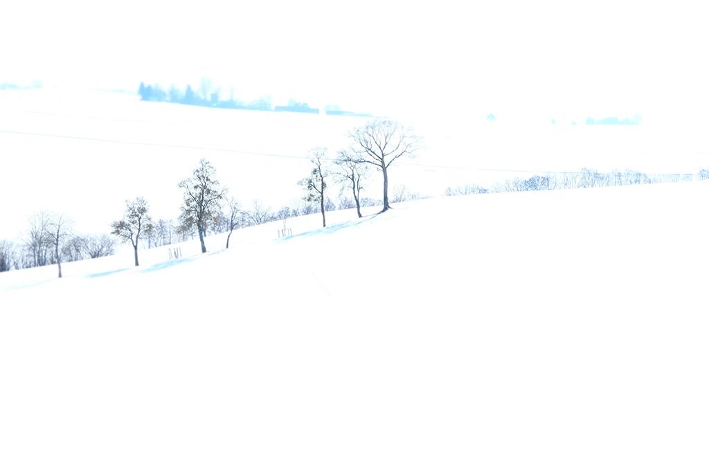 """collection """"forët"""" arbre neige hiver collines blanc"""